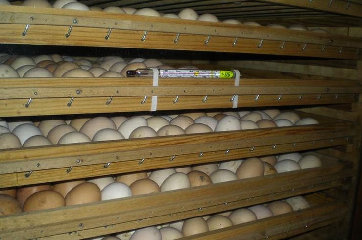Способ хранения яиц для инкубации