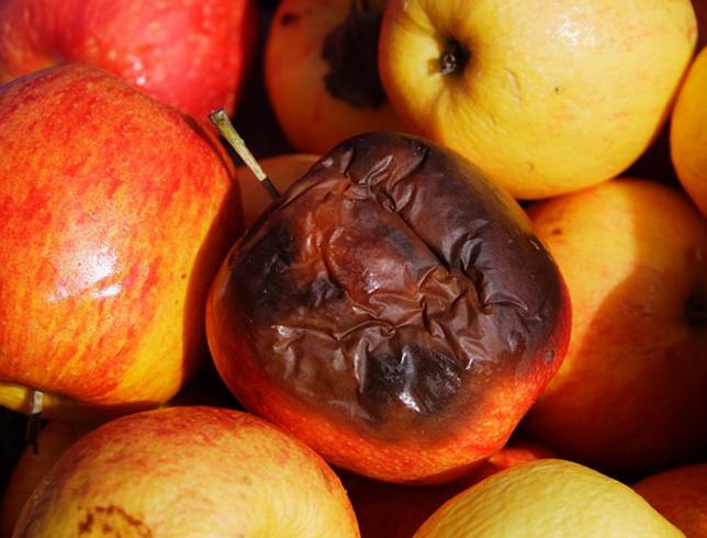 Испорченные яблоки