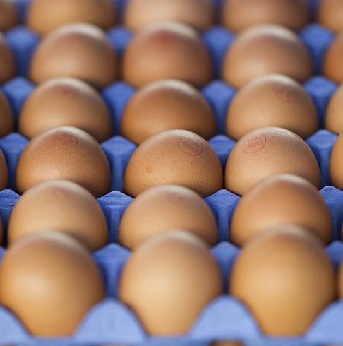 Яйца в таре