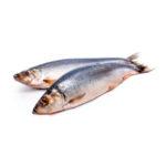 Как нужно хранить соленую рыбу