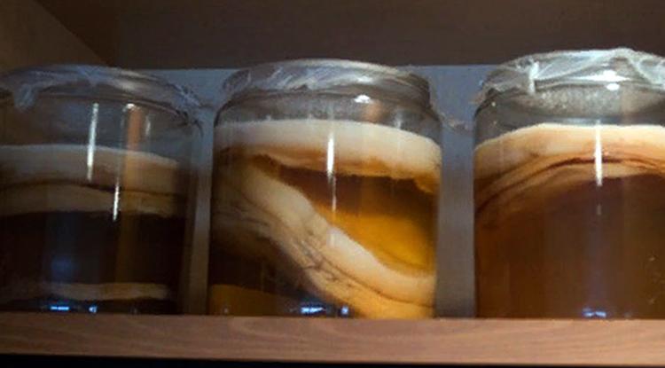 Чайный гриб на полках