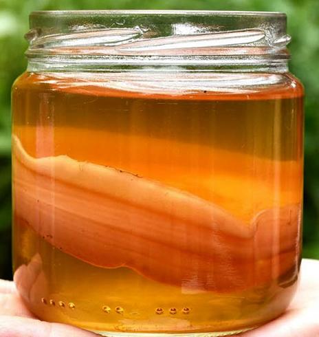 Вид чайного гриба