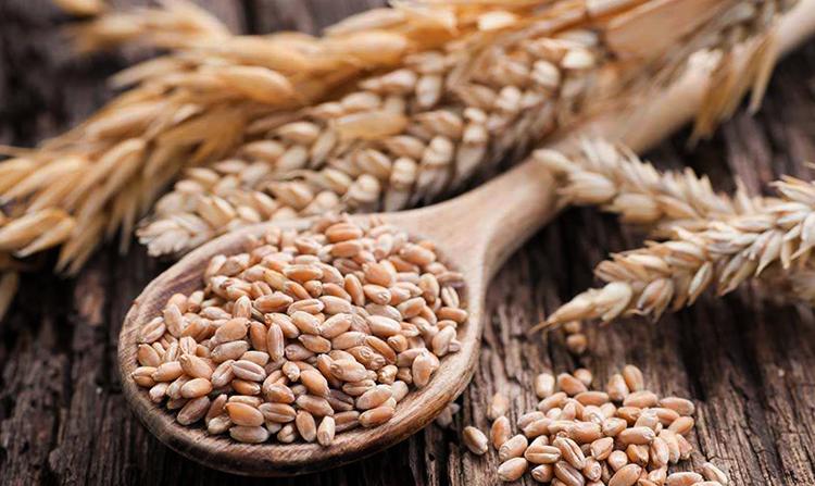 Зерно и пшеница
