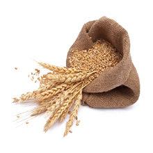 Как и где хранить зерно и пшеницу — правила и советы