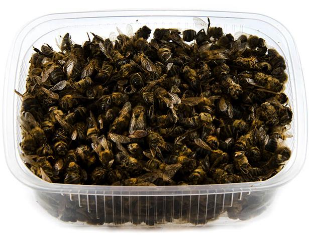 Пчелиный подмор в контейнерах