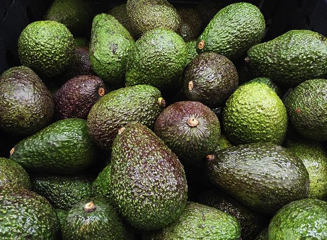 Свежие авокадо