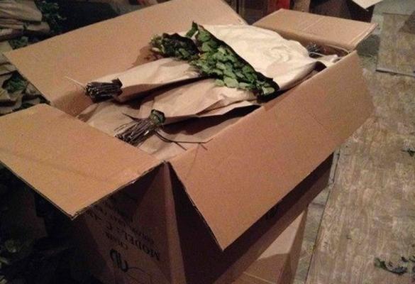 Банные веники в бумаге в коробке