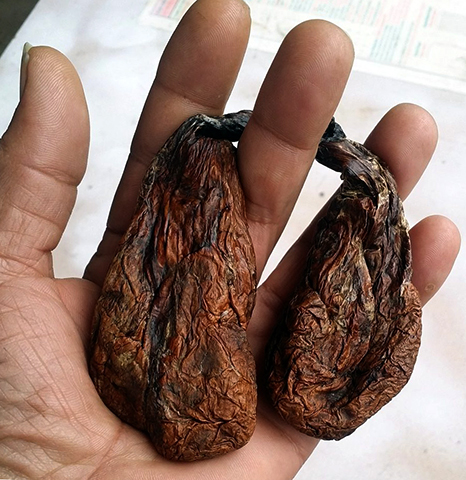 Сушеная бобровая струя