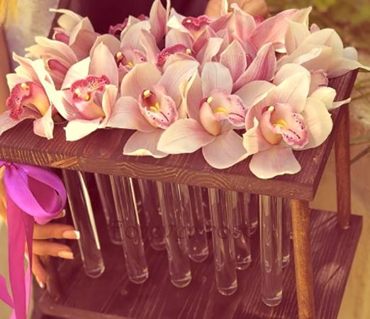 Орхидеи в пробирке