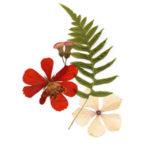 Как правильно хранить сухие цветы?