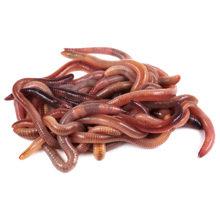 Как хранить червей для рыбалки?
