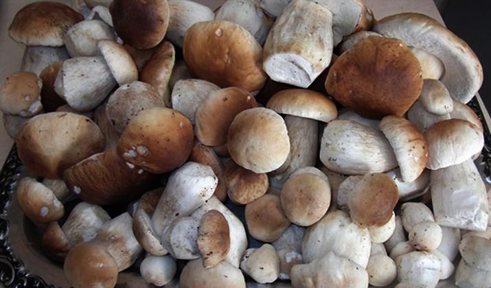 Белые грибы перед обработкой