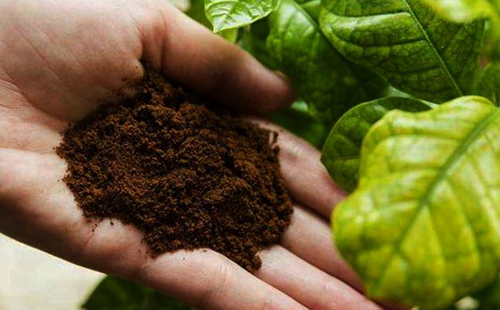 Использование кофейного жмыха как удобрение