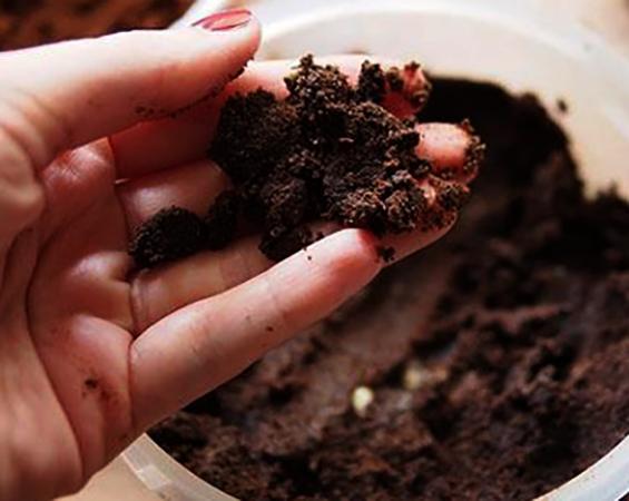 Использование жмыха от кофе для растений