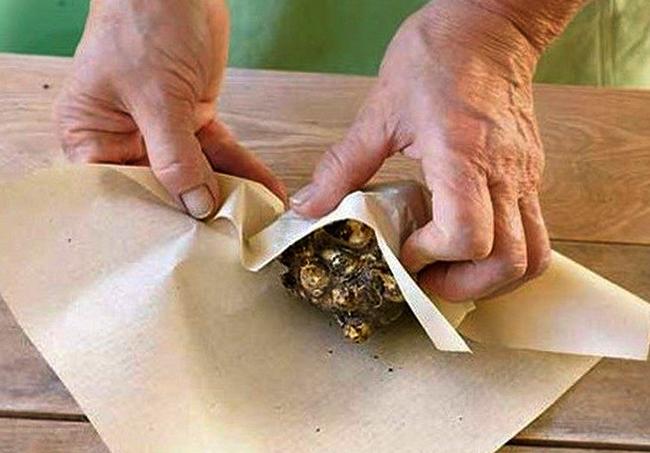 Заворачивание клубней калл в бумагу