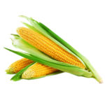 Как нужно правильно хранить кукурузу