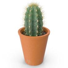 Как правильно хранить и ухаживать за кактусами